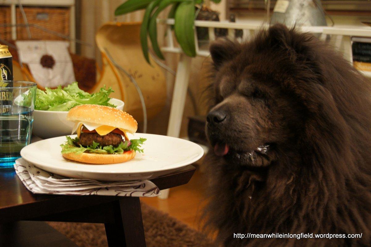 hampurilainen ja chow chow