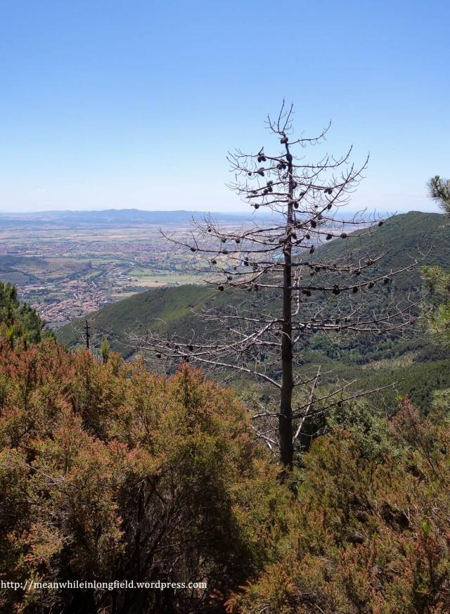 monte pisano loop tuscany (3)