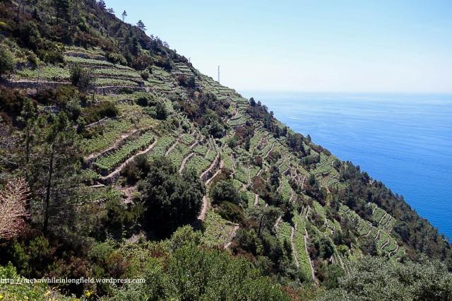cinque terre_hike (10)